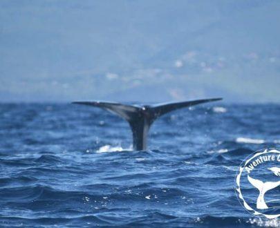 A la Découverte des Cetaces