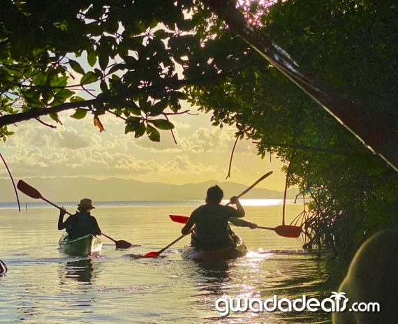 mangrove en kayak guadeloupe